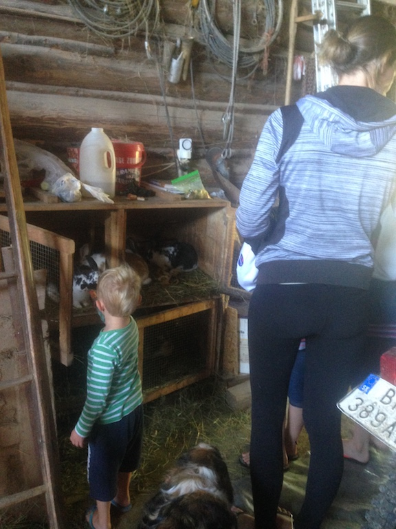 Boerenhof voeren konijnen