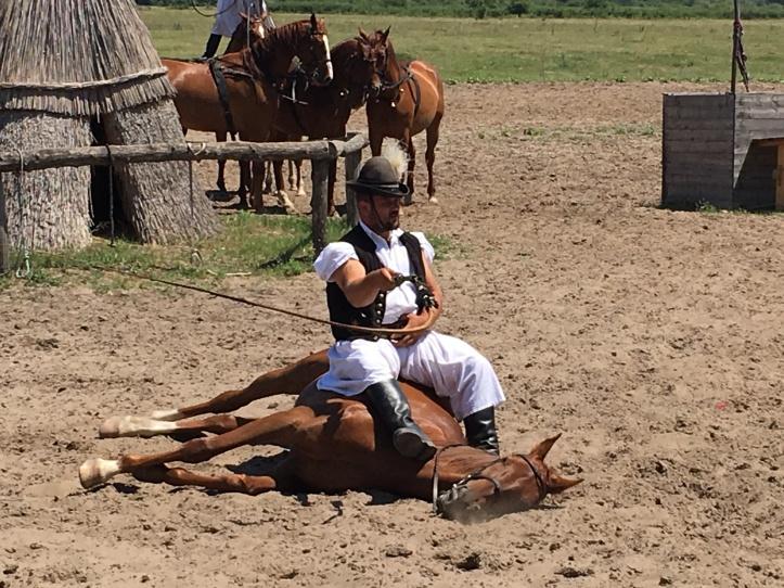 Bugac paard ligt